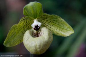Orchidée - 2012