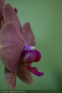 Orchidée - 2014