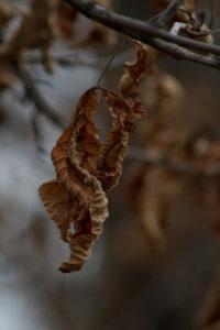 Jardin de novembre - feuilles
