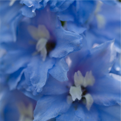 Bleu - fleurs