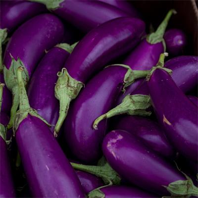 Violet - Aubergines