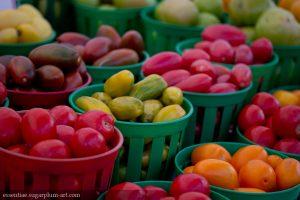 Tomatoes - 2013