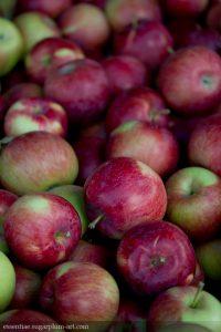 Apples - 2013