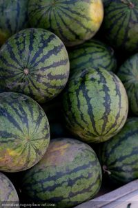 Melons - 2013