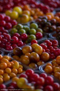 Tomatoes - 2014