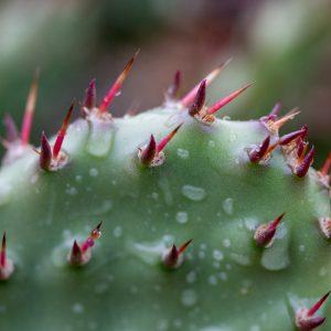 Pluie et cactus