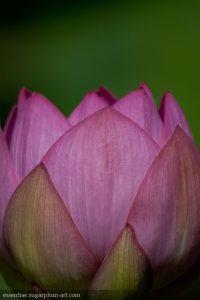 Lotus - 2011