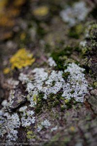 Lichen - 2015